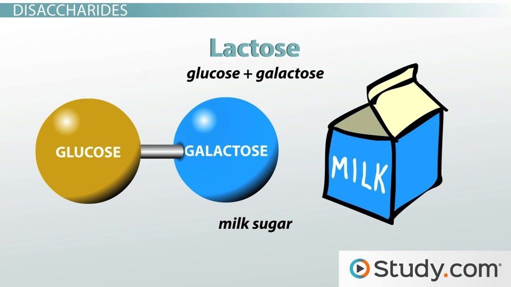 Lactose Intolerance And The Major Disaccharides Definition