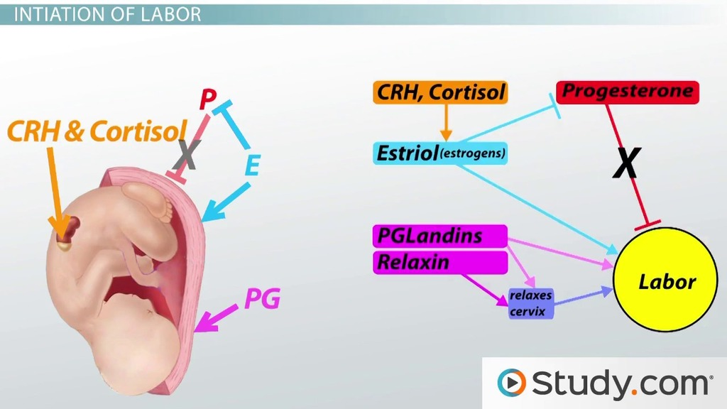 Childbirth The Role Of Hormones In Labor And Delivery Video