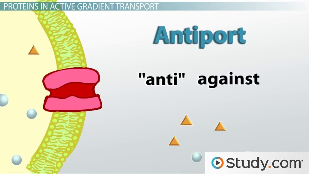 Active Transport in Cells: Definition & Examples - Video & Lesson ...