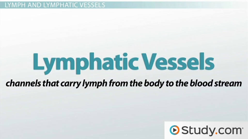 Functions Of The Lymphatic System Video Lesson Transcript