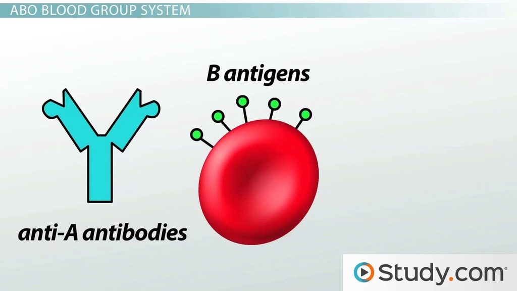 Blood Types Abo System Red Blood Cell Antigens Blood Groups