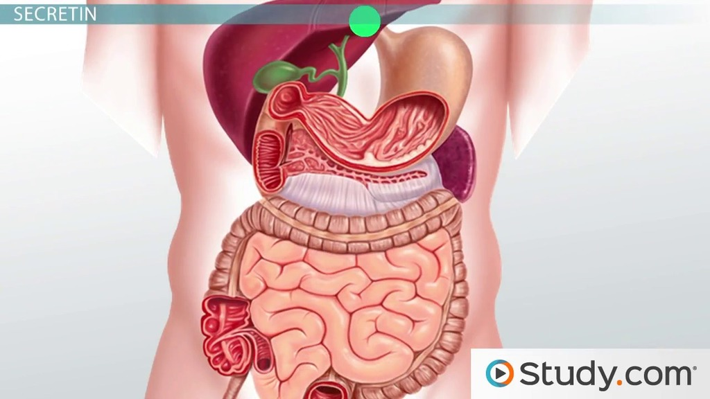 The Gallbladder & Liver: Function & Role in Digestion - Video ...