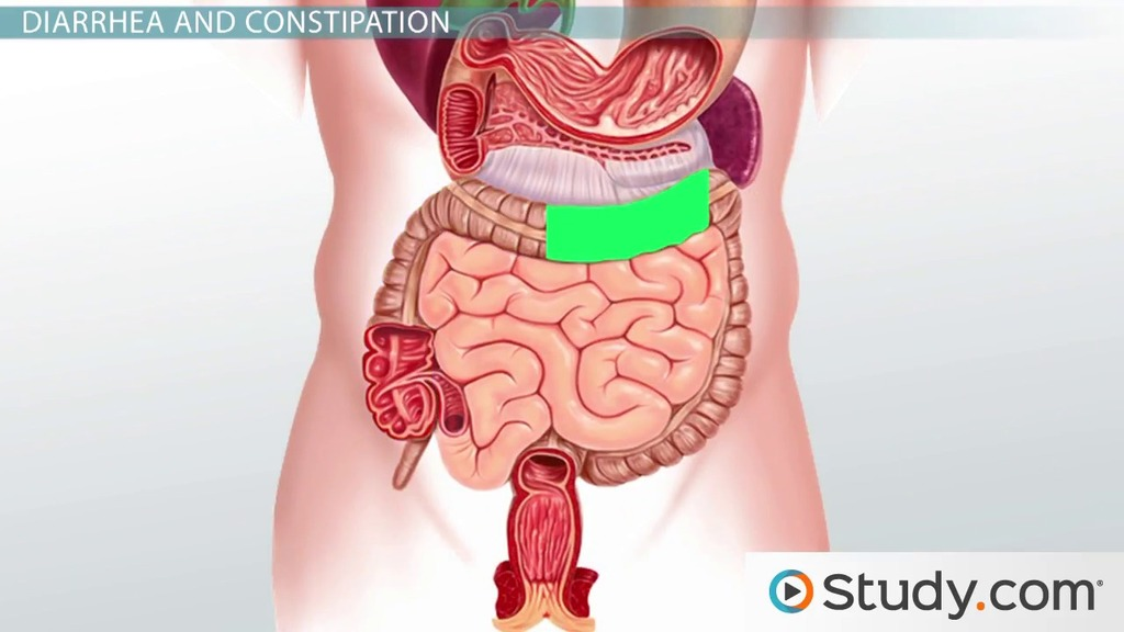 Functions Of The Large Intestine Water Absorption Video Lesson Transcript Study