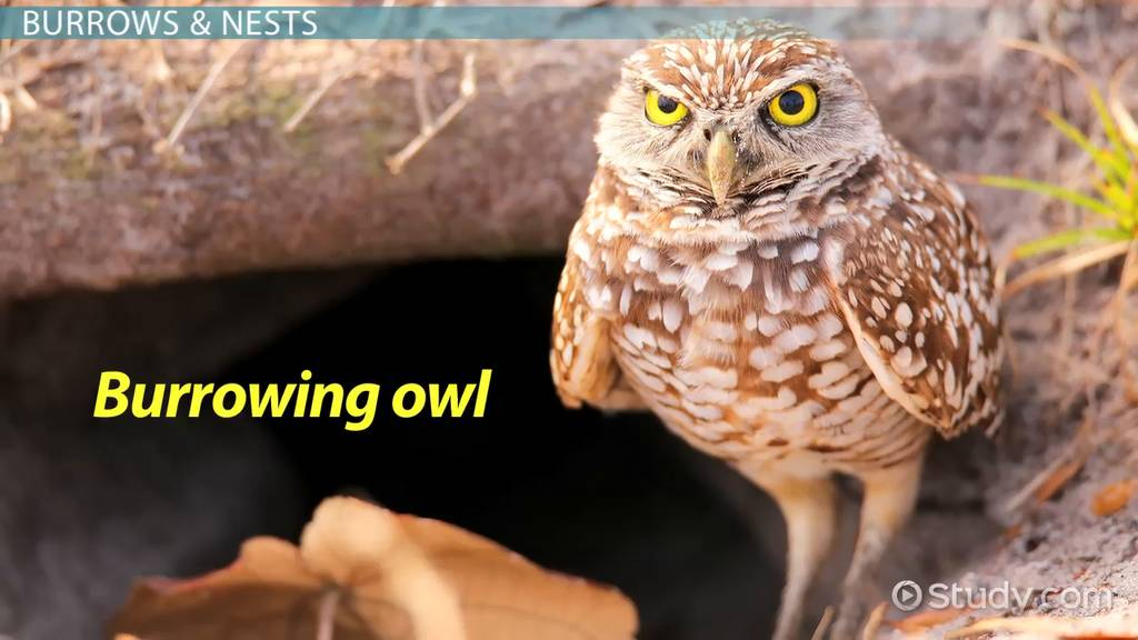 Tropical Rainforest Animal Adaptations Video Lesson Transcript