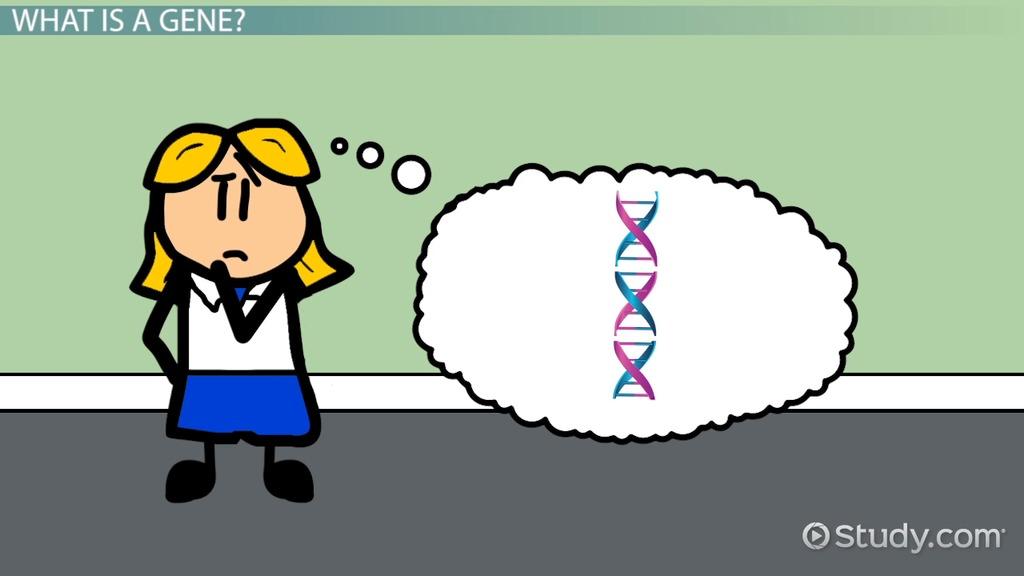 Genes definition