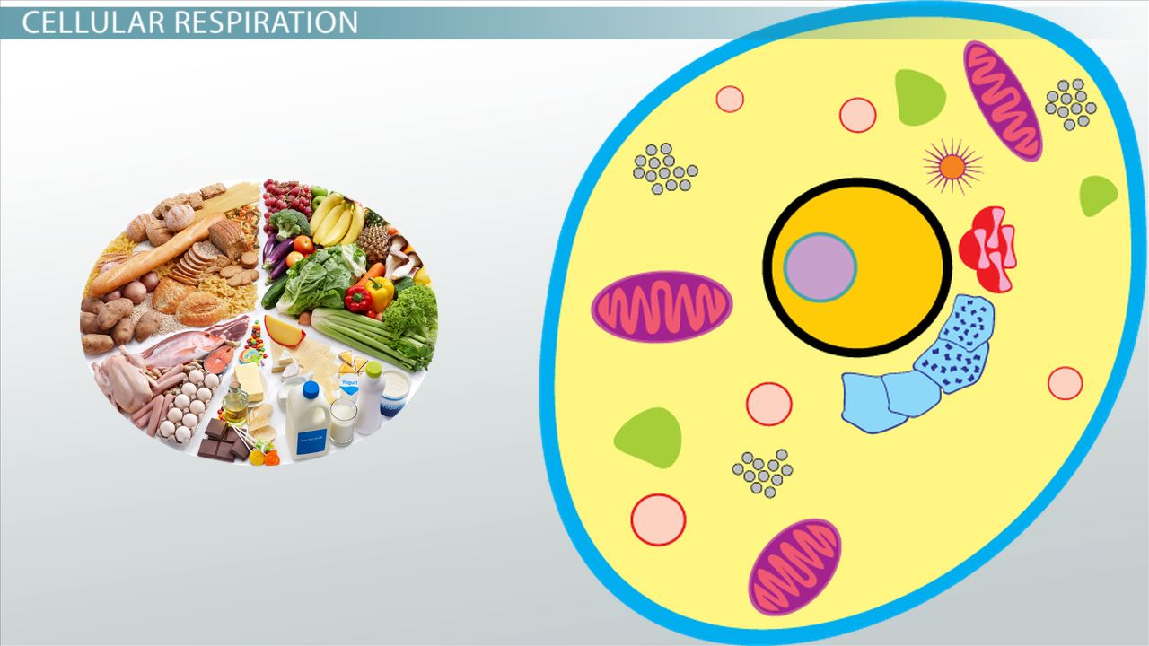 cell bio homework 3