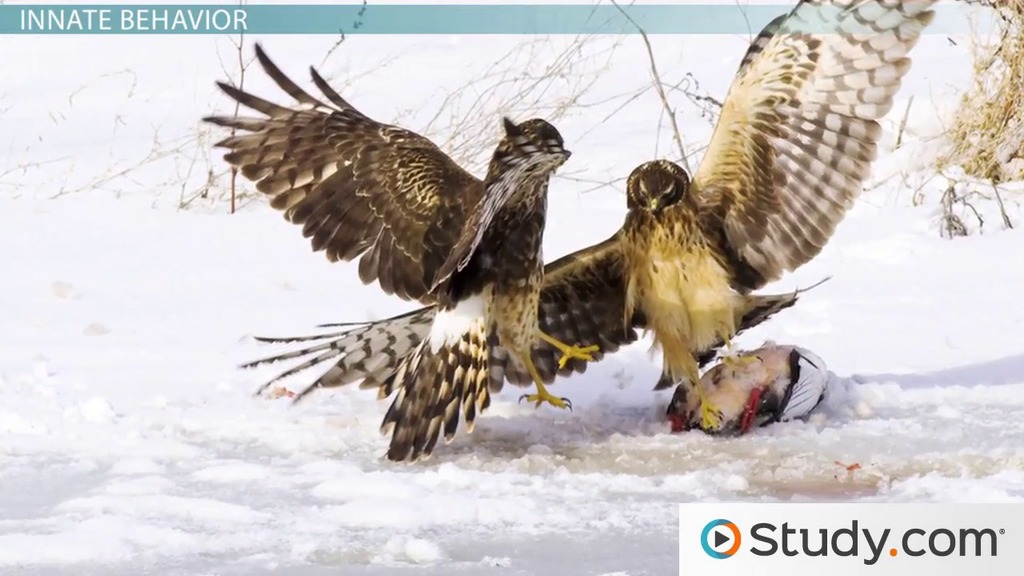 Studying animal behaviour | Nuffield Foundation