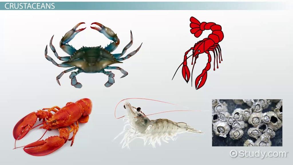 arthropod types  crustacea  chelicerata  u0026 uniramia