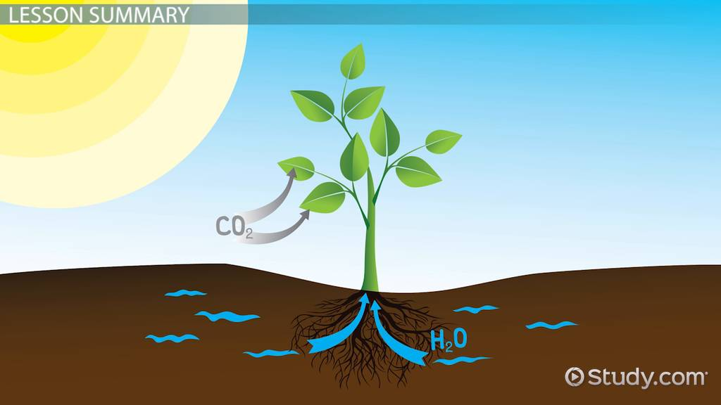 Matter energy changes during photosynthesis video lesson matter energy changes during photosynthesis video lesson transcript study ccuart Gallery