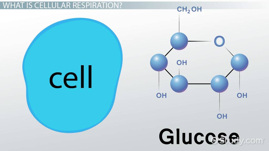 Compare Contrast Fermentation Cellular Respiration