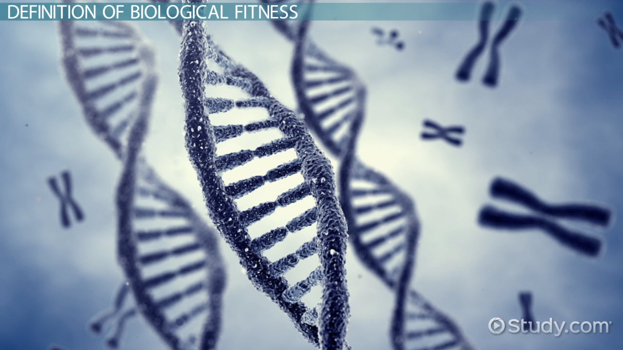 biological fitness definition amp concept video amp lesson