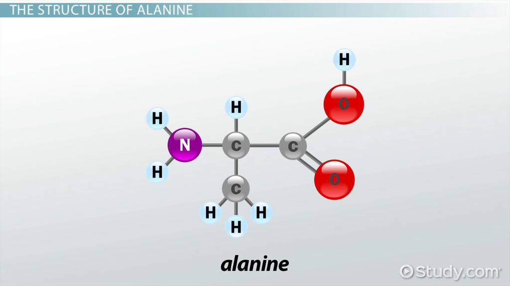 What Is Glucose Formula Definition Regulation Video Lesson