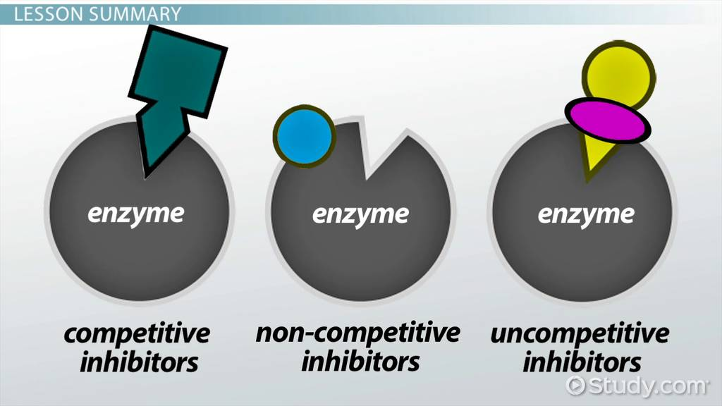 a study of enzymes