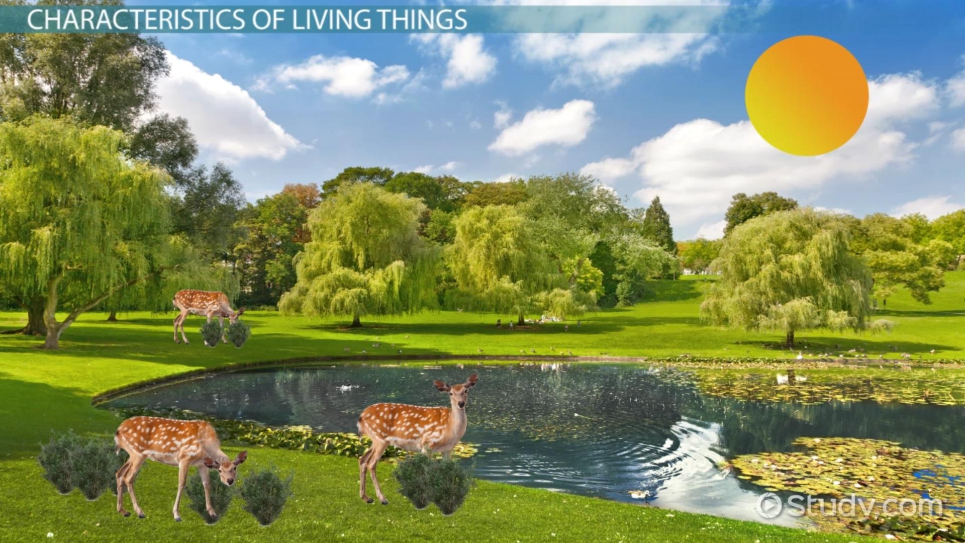Characteristics Of Living Things on High Health Worksheet Printable