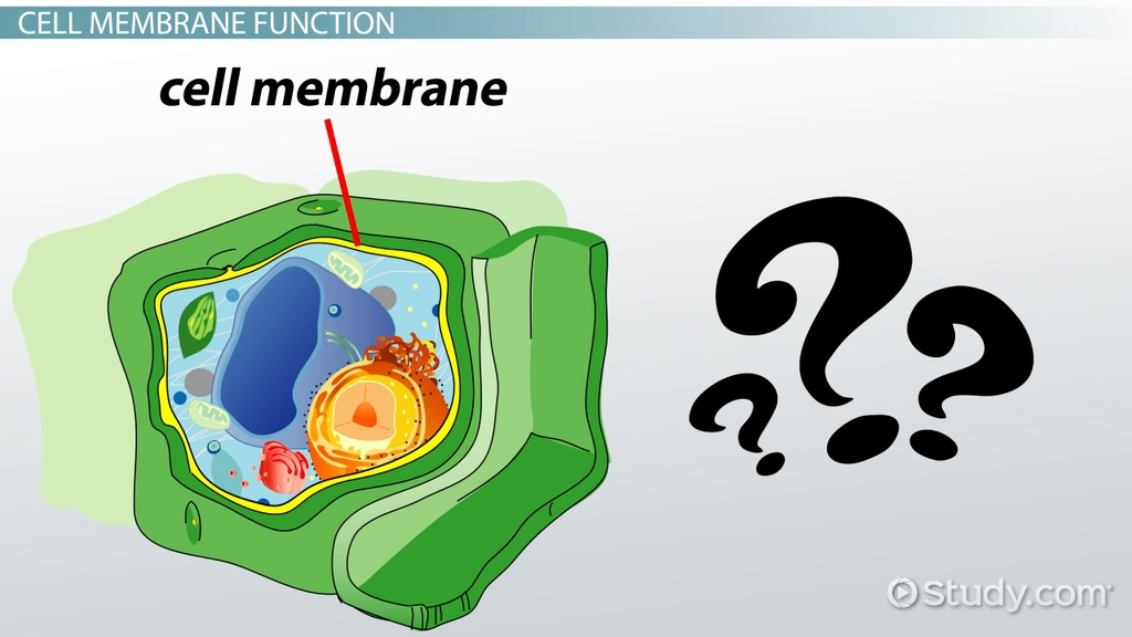 Do Plant Cells Have A Cell Membrane