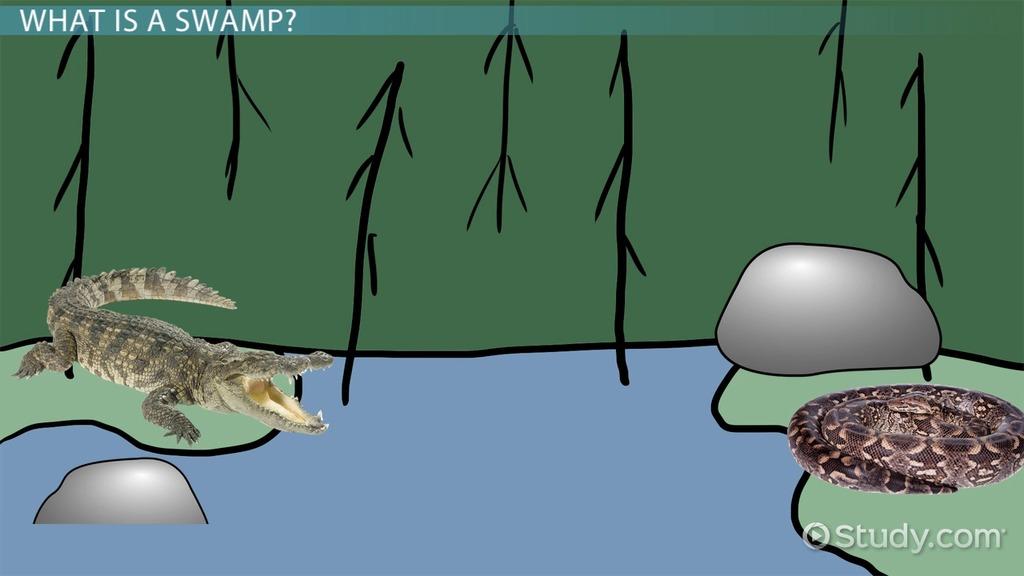 Abiotic Amp Biotic Factors Of Swamps Video Amp Lesson