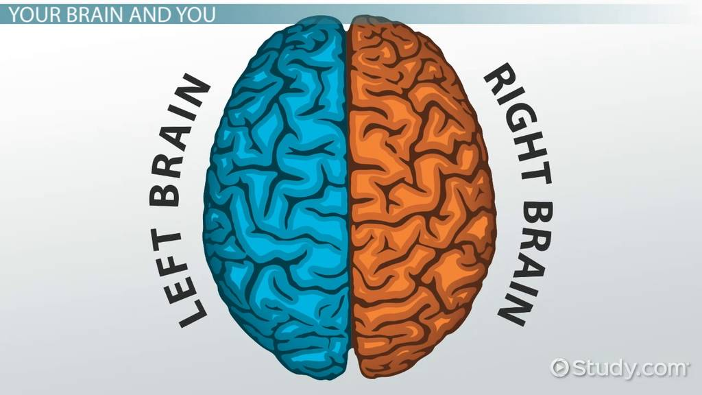brain lateralization Handedness and lateralization cortical organisation and lateralization of the brain in handedness and dominance according to annett most people in our society define.