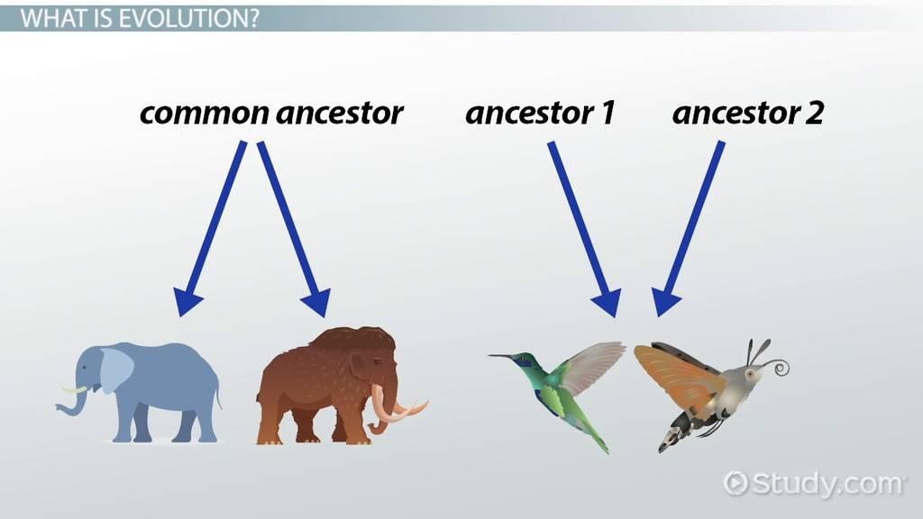 Divergent Convergent Evolution Definitions Examples Video