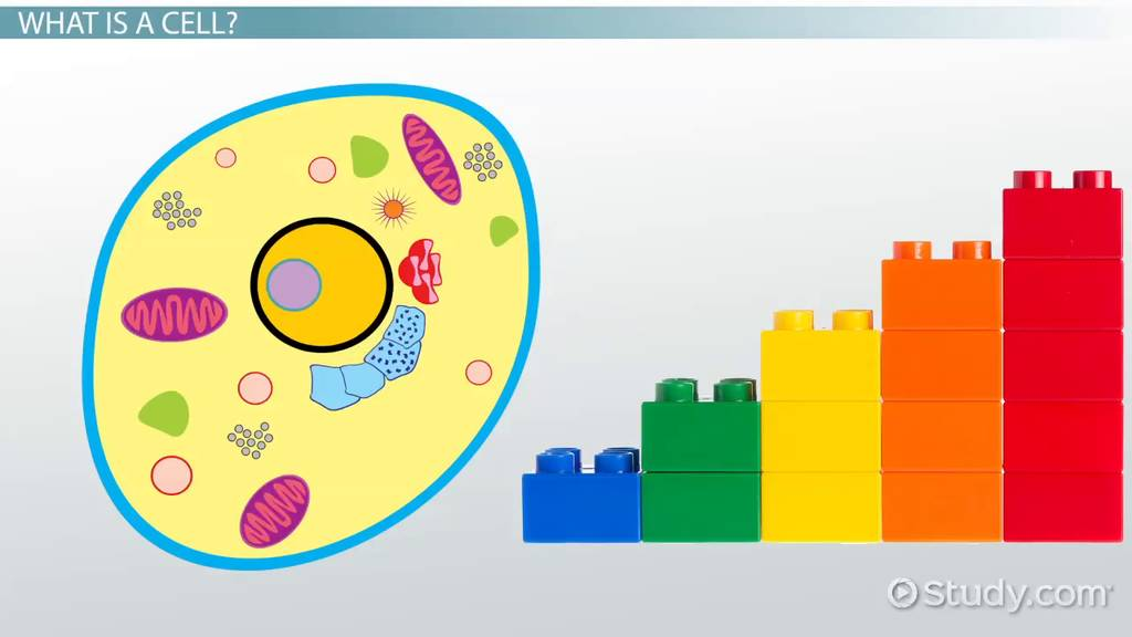 Cell Theory Lesson for Kids - Video & Lesson Transcript | Study.com
