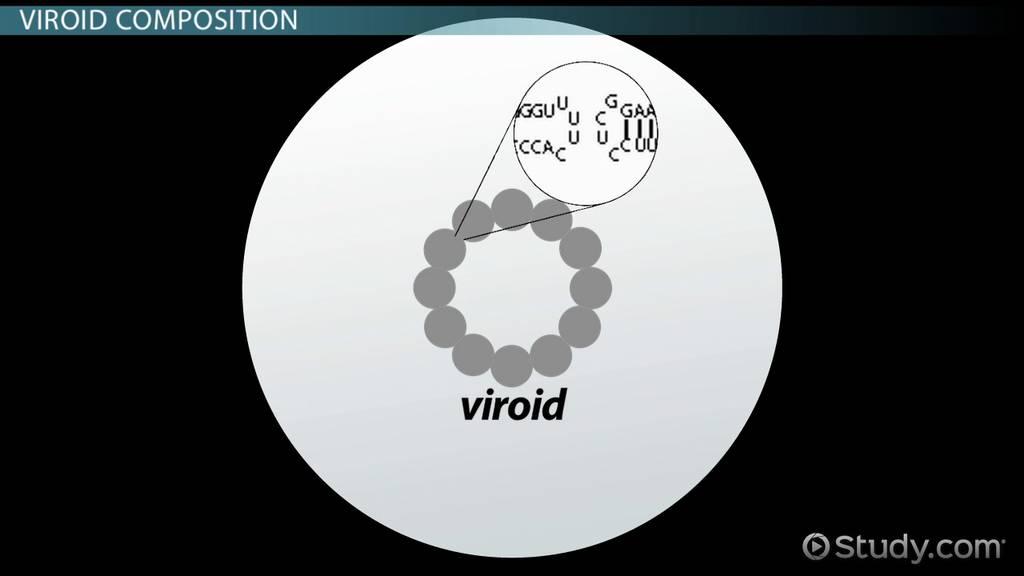 viroid  definition  u0026 structure