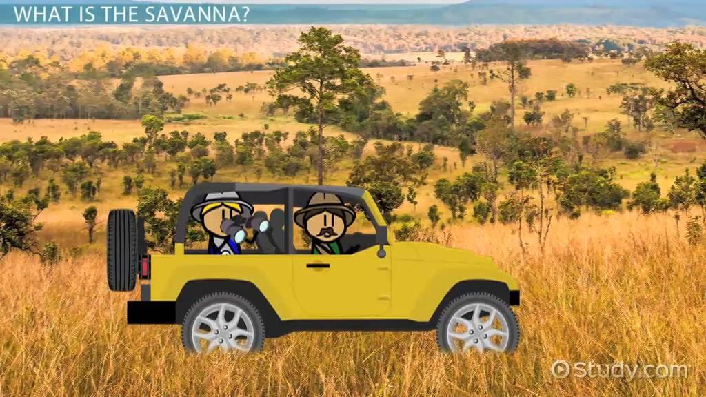 Threats To The Savanna Environmental Problems Amp Solutions