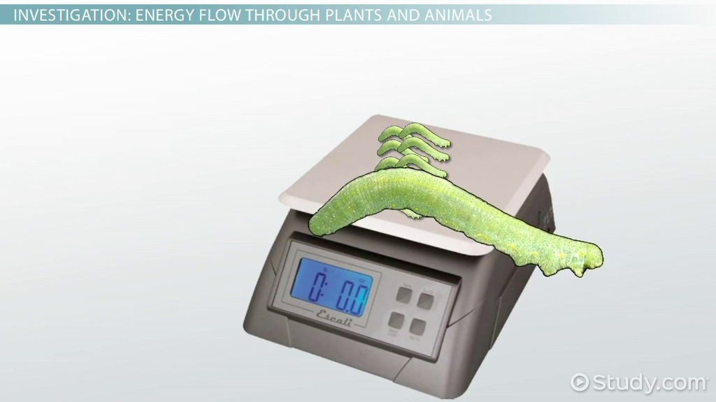 ap biology electrophoresis essay
