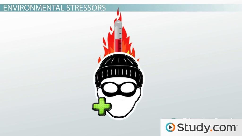environmental stressors  examples  definition  u0026 types