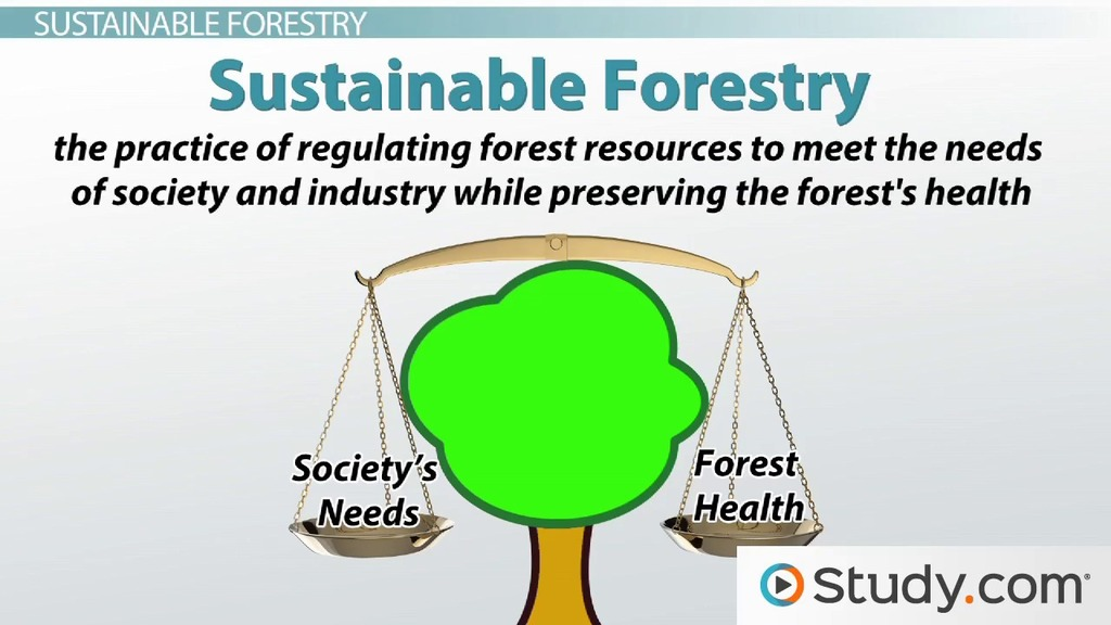 environmental sustainability definition and application video lesson transcript studycom