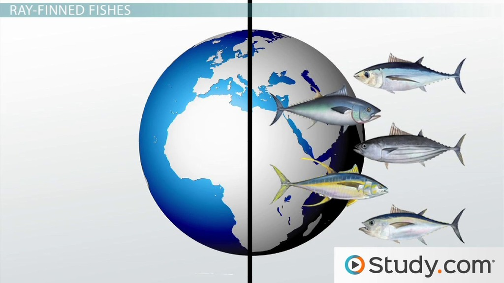 Fishes And Sharks Origins Of Jaws In Vertebrates Video Lesson