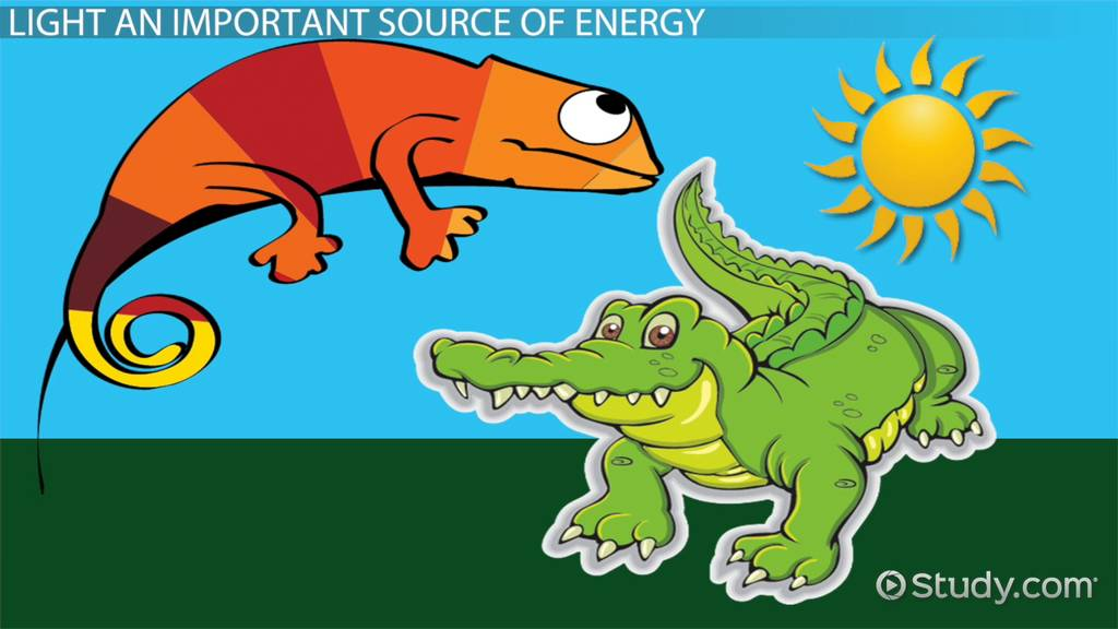Light Energy Sources: Lesson for Kids