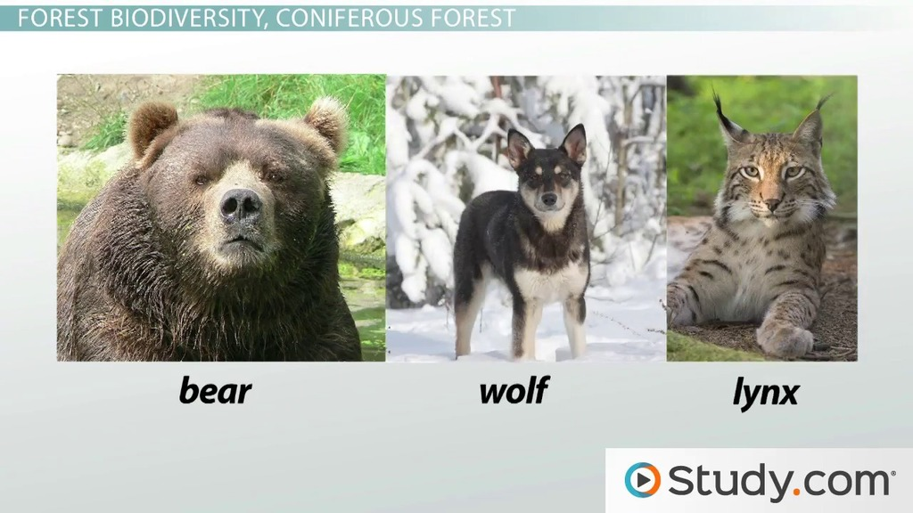 Biological Diversity And The Forest Ecosystems Of The