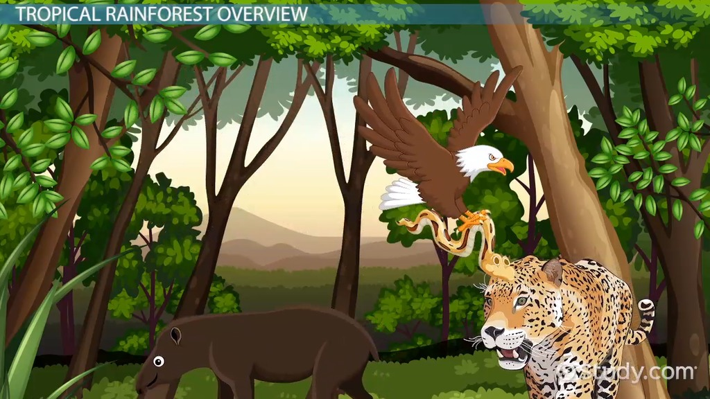 Tropical Rainforest Animal Adaptations Video Lesson Transcript