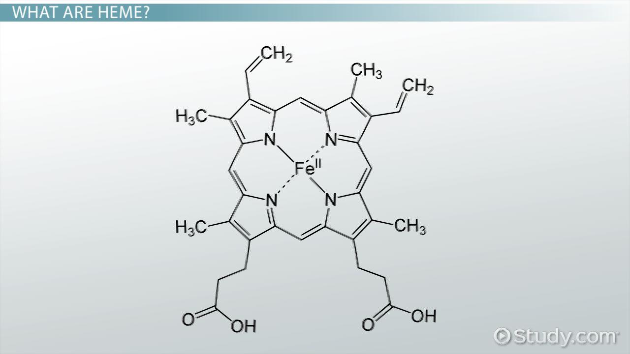 Heme Group: Hemoglobin & Definition - Video & Lesson Transcript ...