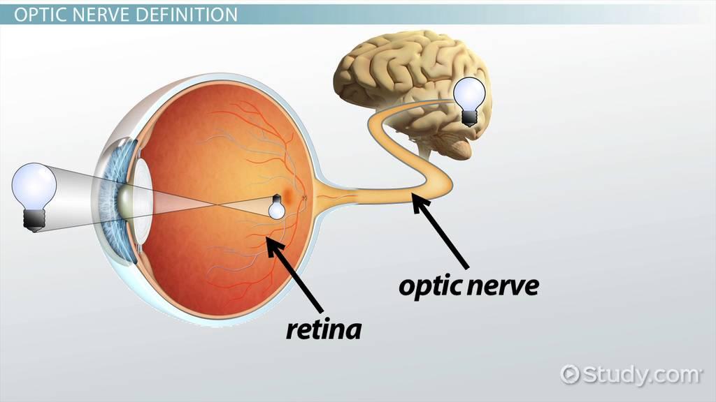 Optic Nerve Damage Causes Symptoms Treatment Video Lesson
