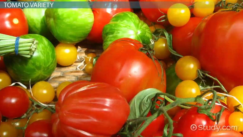 Tomato Facts: Lesson for Kids - Video & Lesson Transcript ...