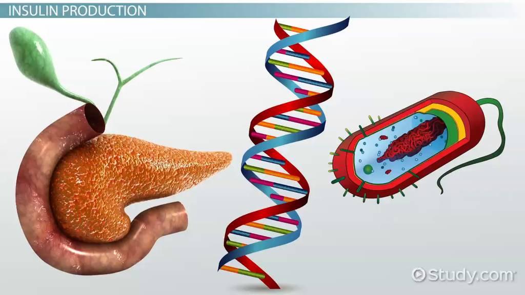 genetic engineering in medicine - Genetic Engineer Sample Resume
