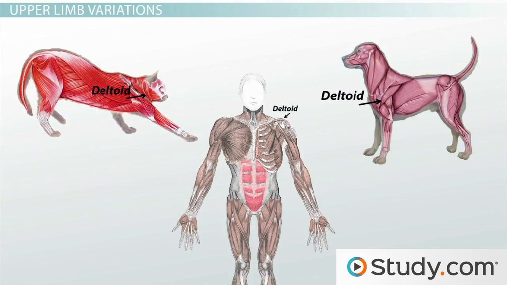 Homologous Structures Comparison Of Body Structures Across Species