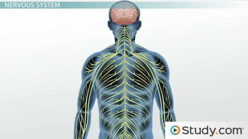 How Age Affects Our Autonomic Nervous System Changes Examples