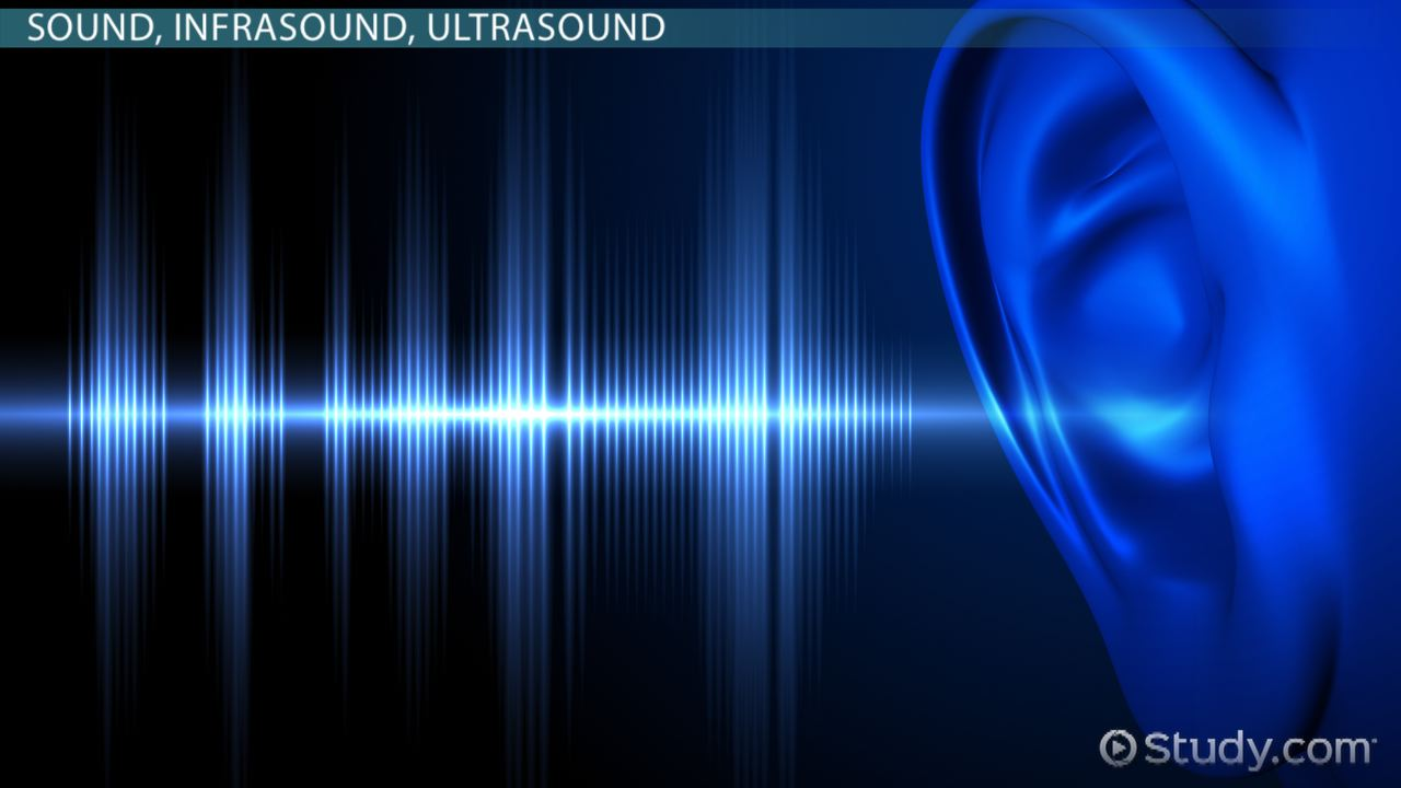 Infrasound: Definition, Effects & Uses - Video & Lesson Transcript | Study.com
