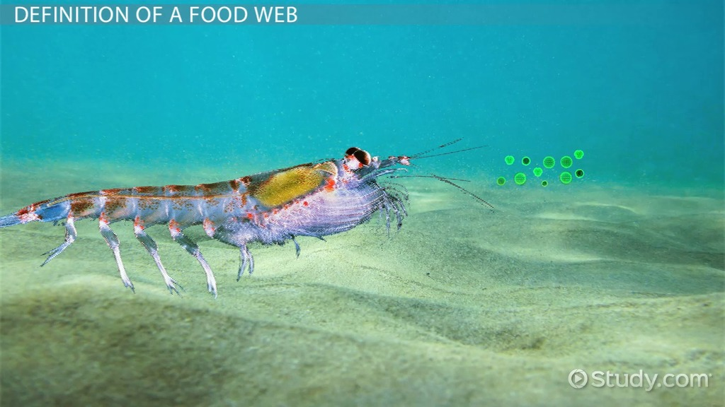 the food web of the pacific ocean video amp lesson