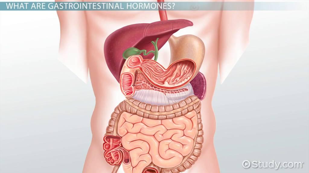 Gastrointestinal Hormones Definition Types Functions Video