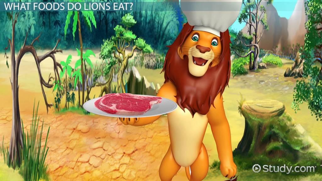 What Do Lions Eat Lesson For Kids Video Lesson Transcript Study Com