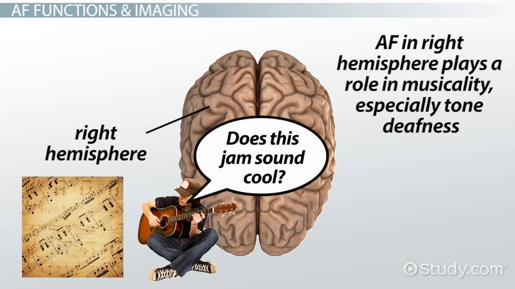 Reticular Activating System: Definition & Function - Video & Lesson ...