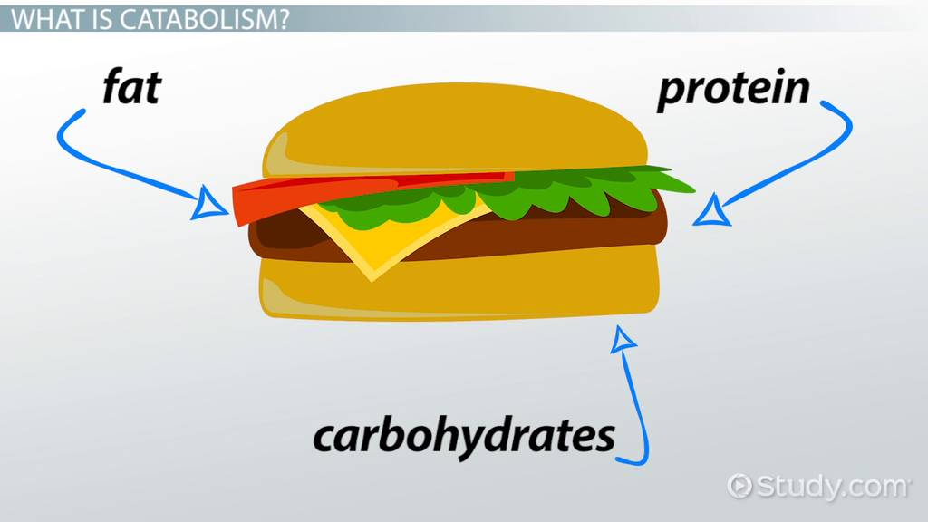 Catabolism  Definition   Examples  Video   Lesson