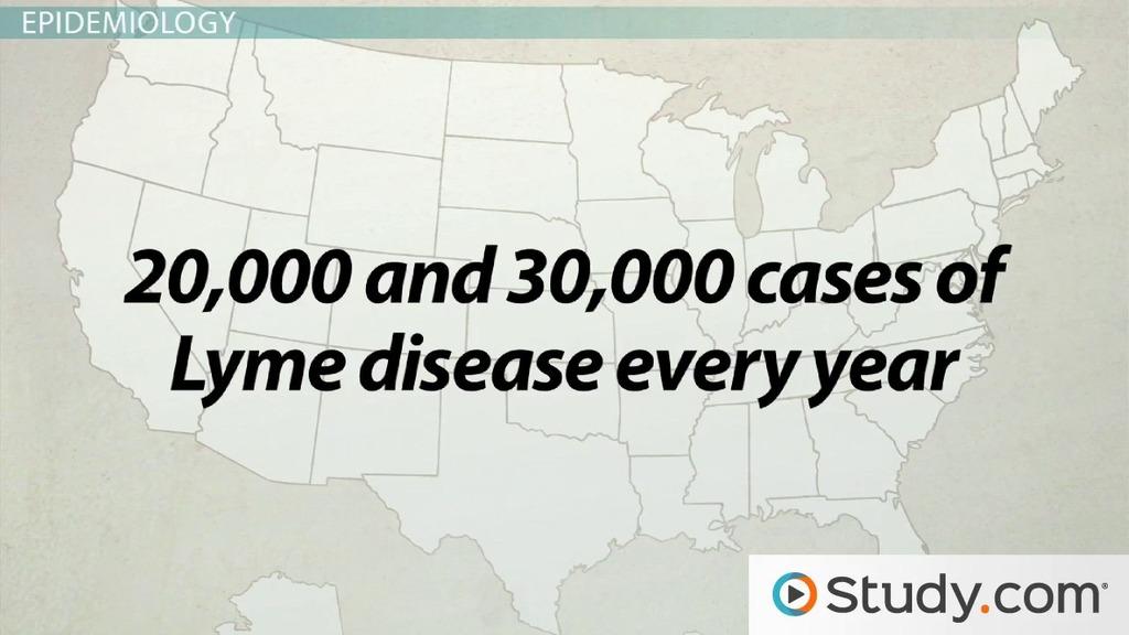 lyme disease essays