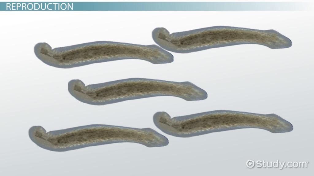 Sperm Cell: Definition & Function - Video & Lesson Transcript ...