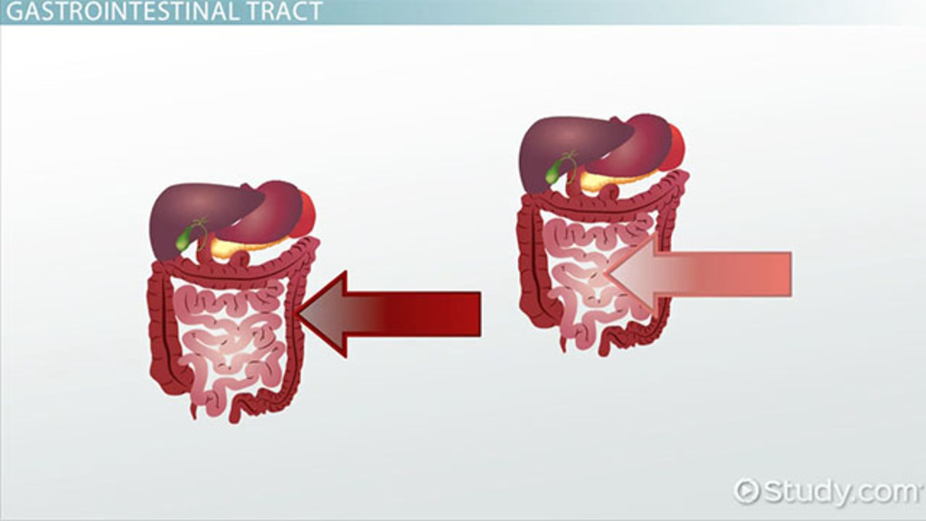 Major Structures Of The Intestines Video Lesson Transcript
