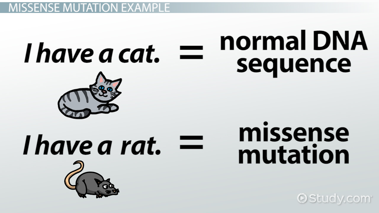Missense Mutation Definition Example Video Lesson Transcript
