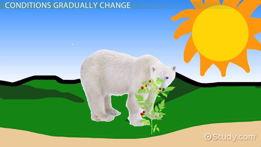 Ecosystem Homeostasis  Definition  U0026 Examples