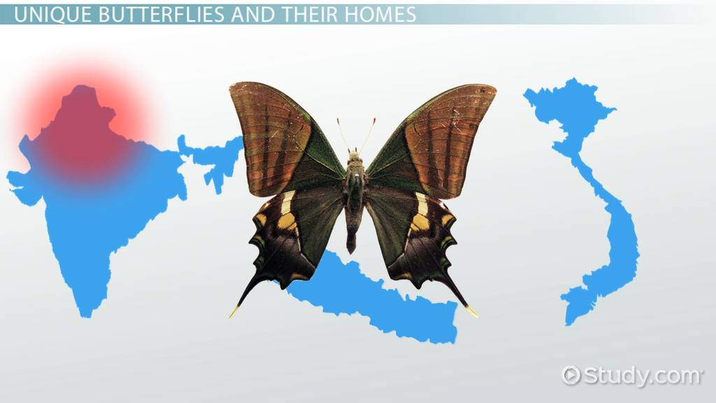 Where Do Butterflies Live Lesson For Kids Video Lesson
